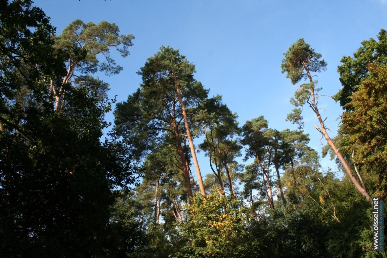 oissel-net-foret-entre-dans-automne-2007