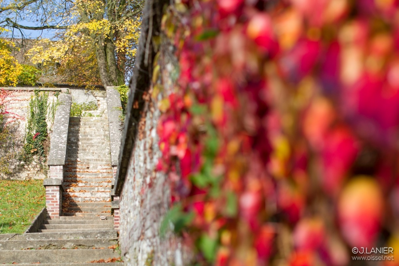 oissel-net-automne-au-jardin-11-2015